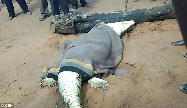 Crocodile swallows boy, 8, on his way from school before being cut open by angry villagers (photos)