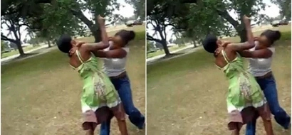 Kalenjin women FIGHT over a man and you won't help but laugh (video)
