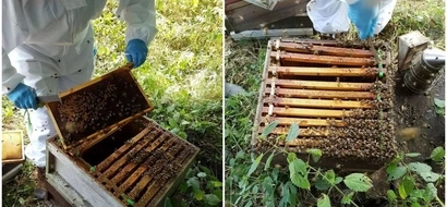 Somebody steals 24,000 BEES from private estate leaving owners heartbroken (photos)