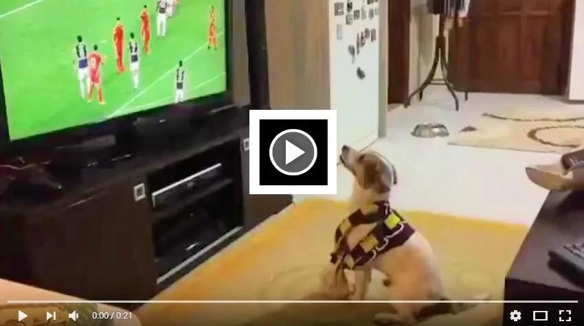 El perro futbolero se toma las redes sociales