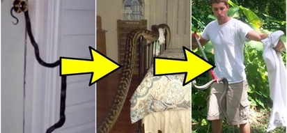 7 flawless hacks to keep snakes away from your home