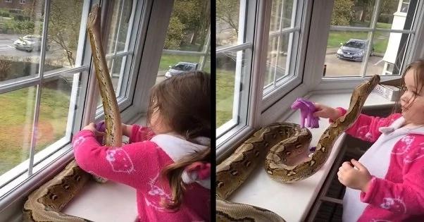 toddler-python