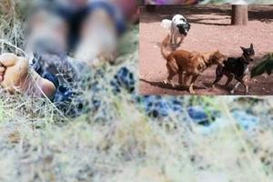 Un hombre fue quemado y unos perros se devoraron sus restos