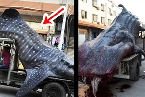 What was that? Netizens still can't understand WHAT was caught by this fisherman... Find out the TRUTH!