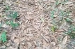 TRENDING: Spotting Time! Can you spot the snake in this photo?