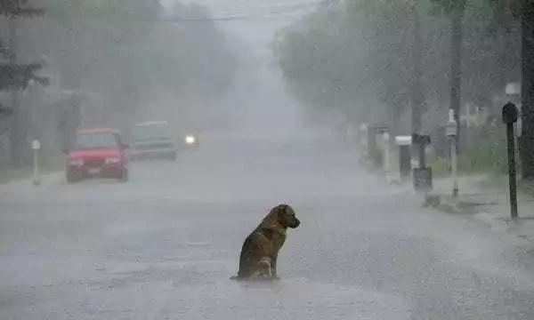 La última oración de este perro te hará llorar
