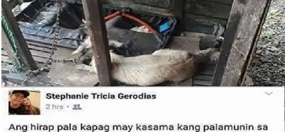 Social media goes all out after netizen tags her pet as 'palamunin'