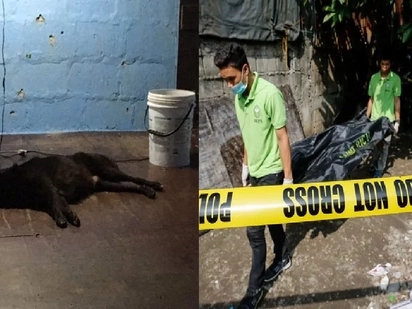 Blackie the dog suffers depression after owner dies in Pasig City summary killing