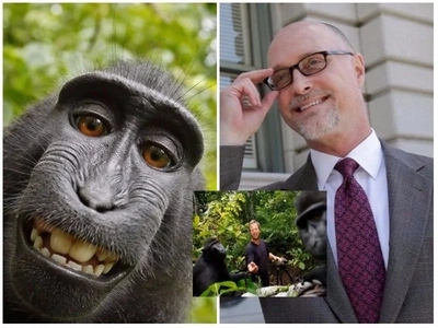 Man who was sued by monkey claims bizarre legal battle over photo copyright has left him broke