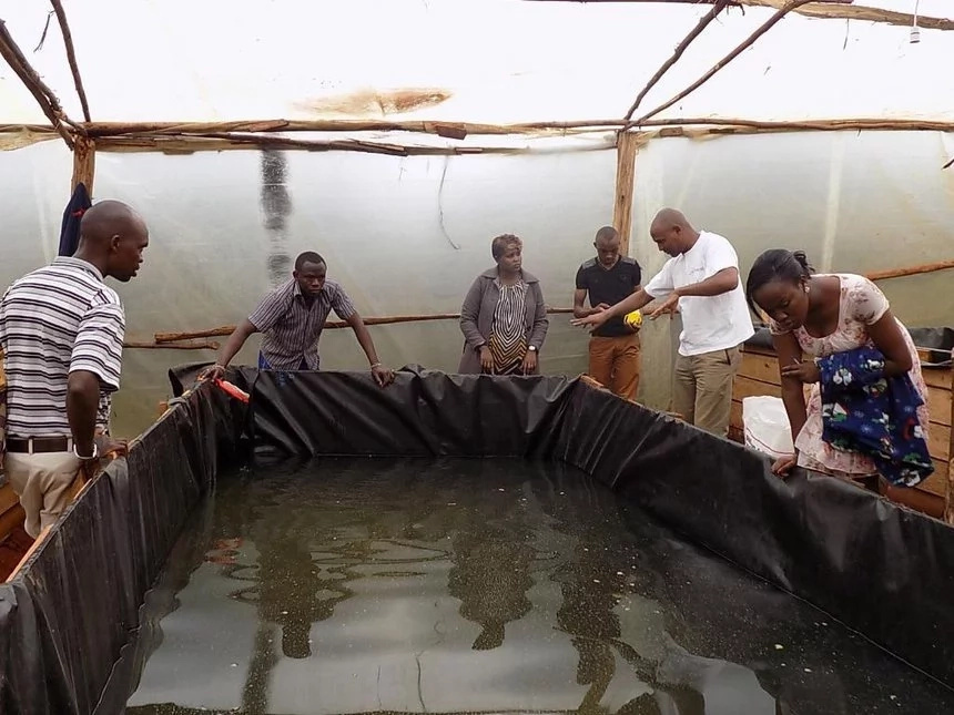 Fish farming in kenya business plan and tips for Fish farming business