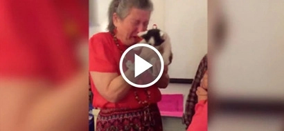 Students surprised teacher with box of kittens after her cat dies. Her reaction will make you cry hard