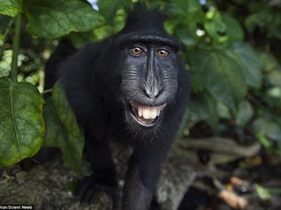 Move Over Pretty Girls - These MONKEYS Show How A Selfie Is Done