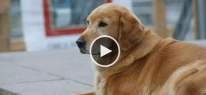 WATCH: Dog walks away from home for 5 years; here's what the owner does