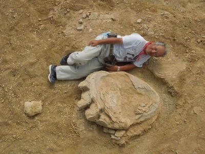 Scientists have discovered the LARGEST dinosaur footprint ever, measuring 1.7 meters!