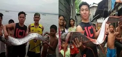 Rare Oarfish captured in Gensan, villagers believe it's a sign of a huge Earthquake coming!