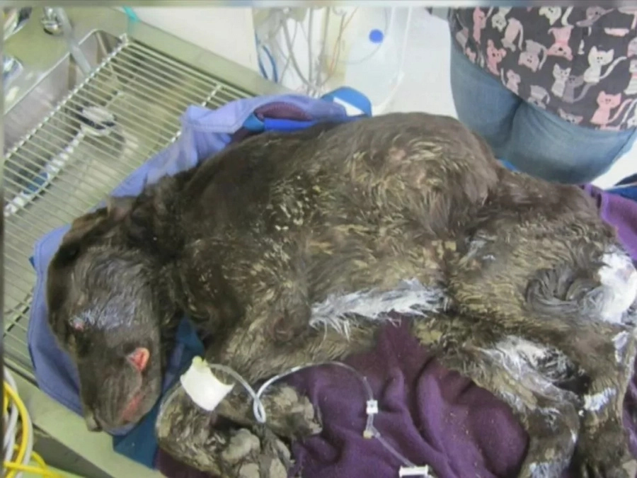Dog Falls In A Well And Is Trapped There For An Entire Month. Finally, Rescuers Find Him Alive