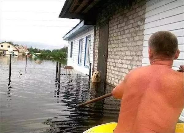 Druzhok in Flood