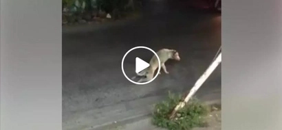 Suffering dog drags his legs while walking but later shocked motorists when they came to the rescue