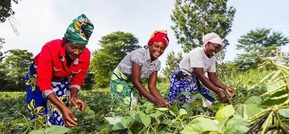 Agribusiness in Kenya in 2018: Inspirational ideas