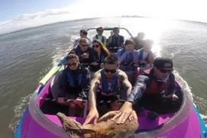 Stop Everything & WATCH This Wallaby Chilling On The Boat