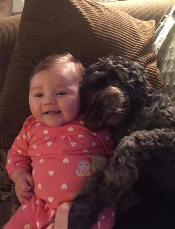 Dog saves 8-month old baby in a house fire