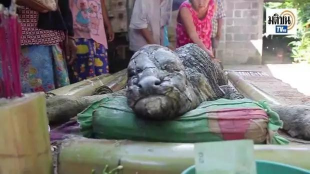 Animal Hybrid Of Bull And Crocodile Baffles Locals In Thailand