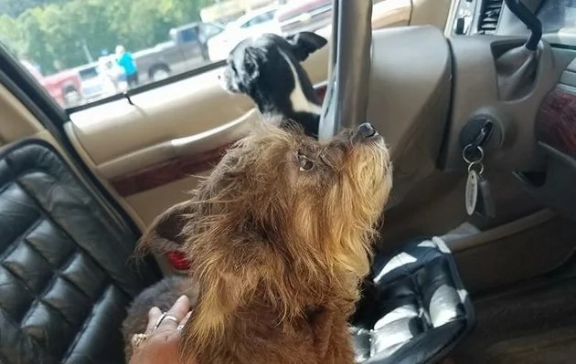Two dogs smash into the wall, when were left alone in the car