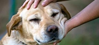 Increíble: ¡mostrar compasión por los animales mejor tu salud! ¡Descubre exactamente cómo!
