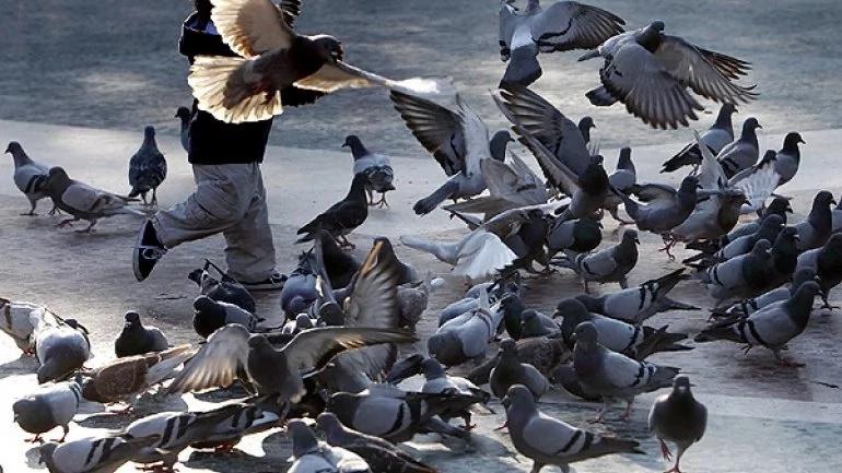 Bogotá amenazada por las palomas