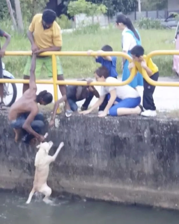 Heroic! Man rescues drowning puppy using only his legs in a dramatic show of courage