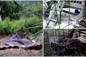 Farmer FIGHTS giant 4.5m python to death after it swallowed his goat (photos, video)