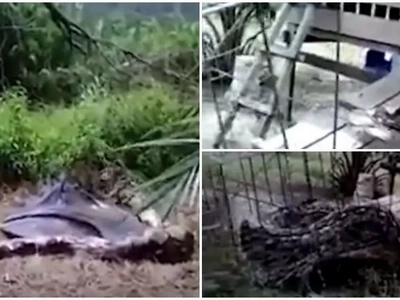 Angry farmer batters HUGE 4.5m python to death after it swallowed his goat (photos, video)