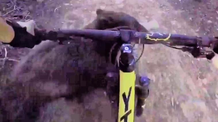 Un ciclista de montaña grabó cuando se cruzó con un oso