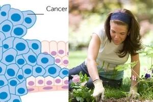 Los doctores recetaron jardinería terapéutica para el cáncer y funcionó