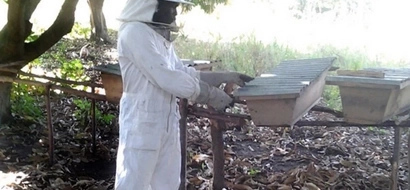 17-year-old boy's beekeeping business is BOOMING (photo)
