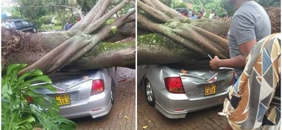 Giant tree smashes worshipers' cars at church parking lot