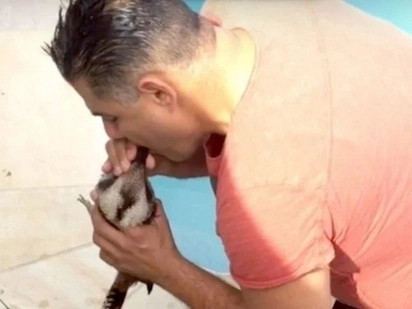 Australian Man Revives A Kookaburra The Drowned In His Pool