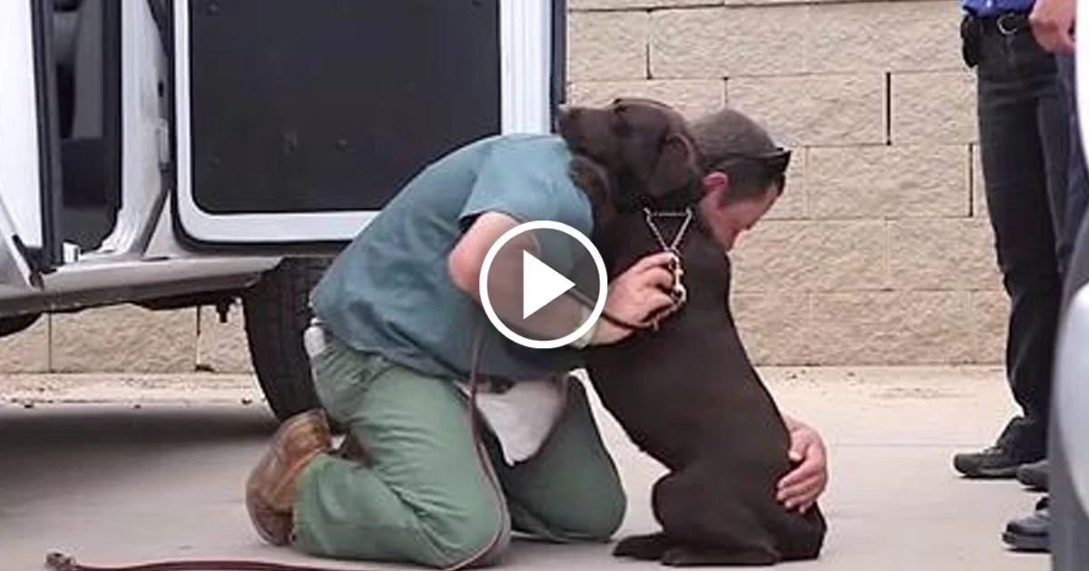 A Tough Prison Inmate Raised This Dog, But Watch What Happens When He Says Goodbye...
