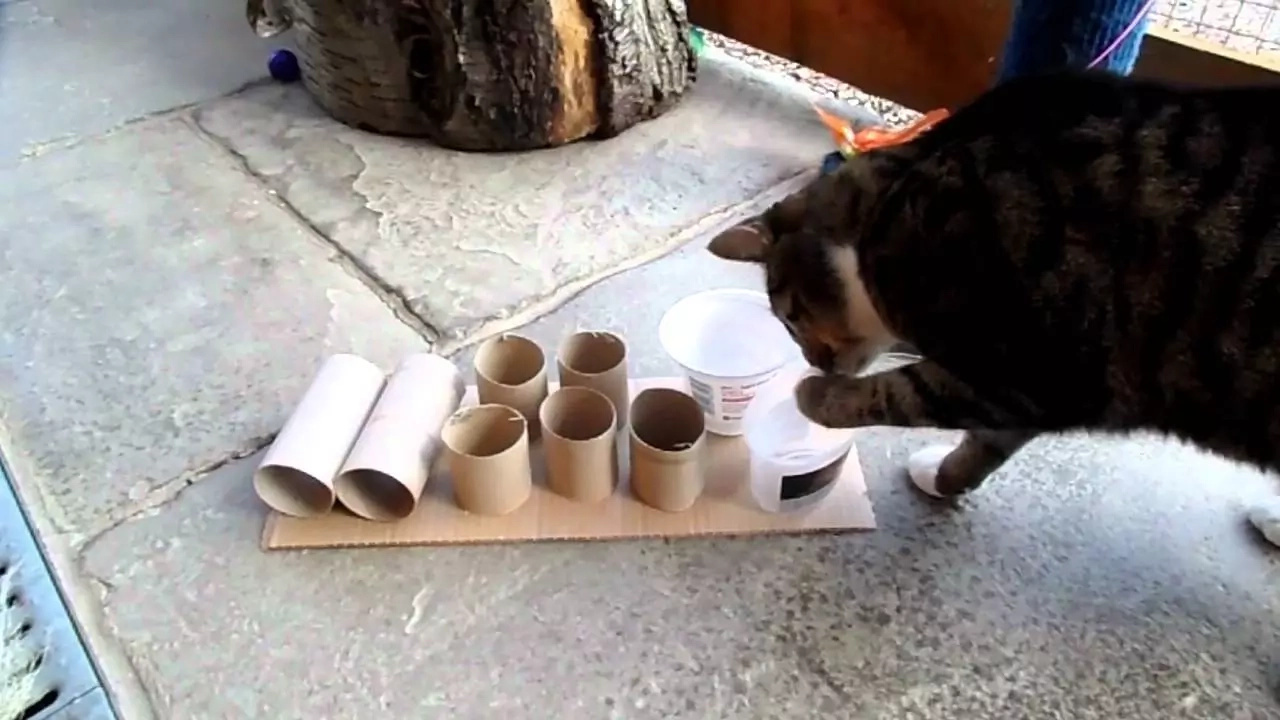 Food puzzles can save you and your cat a lot of trouble