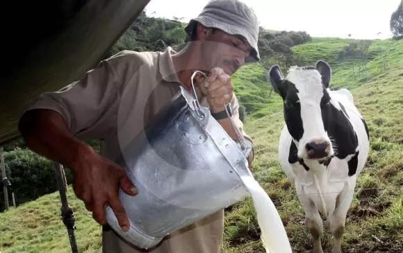 Productores tienen que botar litros de leche a la basura