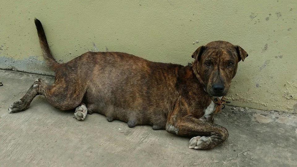 ¿Está cerca Colombia de no tener perros callejeros?