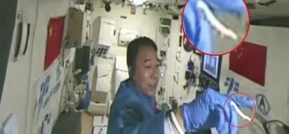 Bonga! Chinese astronaut walking silkworm in space goes viral