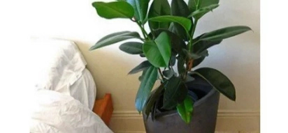 3 house plants that can purify the air at home