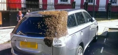 A real life horror movie – 20 000 bees chase the car for 2 days!