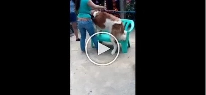 Ang sama! Cruel woman caught hitting St. Bernard dog in Baguio City for photo's sake