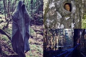 "Creepy! This Forest In Japan is Known as ""Suicide Forest"" Find out The Reason Why!"