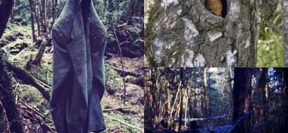 """Creepy! This Forest In Japan is Known as """"Suicide Forest"""" Find out The Reason Why!"""