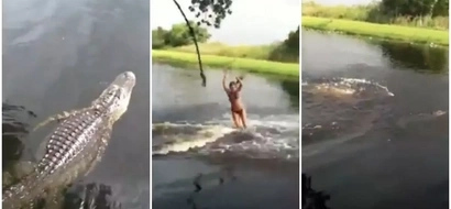 Kids and family caught on video swimming with huge alligator