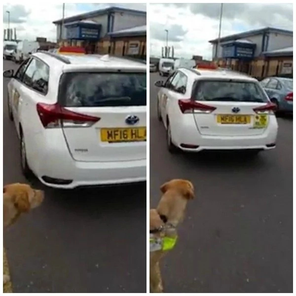 Muslim taxi driver, 43, refuses to give a lift to blind man because his DOG is against Islam (photos, video)