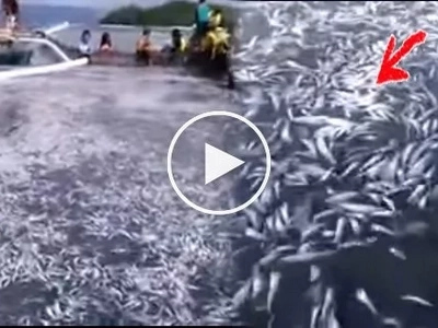 Rare phenomenon of thousands of fish caught in Romblon believed connected with appearance of oarfishes